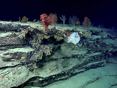High density and diversity of sponges and corals seen on the ridge crest during Dive 04.