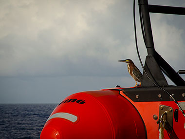 This bird caught a ride on NOAA Ship Okeanos Explorer's small boat as the ship headed offshore for the Windows to the Deep 2018 expedition.
