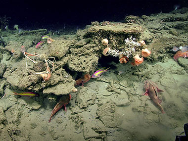 "The feature discovered at the ""Big Dipper"" anomaly was in fact rocky habitat that was home to a number of fish, crabs, anemones, and coral."