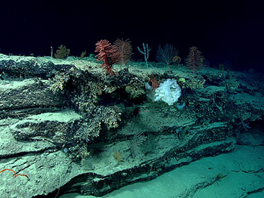 Sponges, corals, urchins, and other organisms populate outcrops of hard substrate on the seafloor.