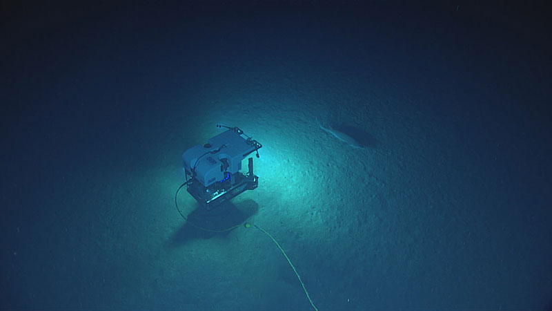View of the Hexanchus sp. shark and ROV Deep Discoverer as seen from Seirios during Dive 6 of the expedition.
