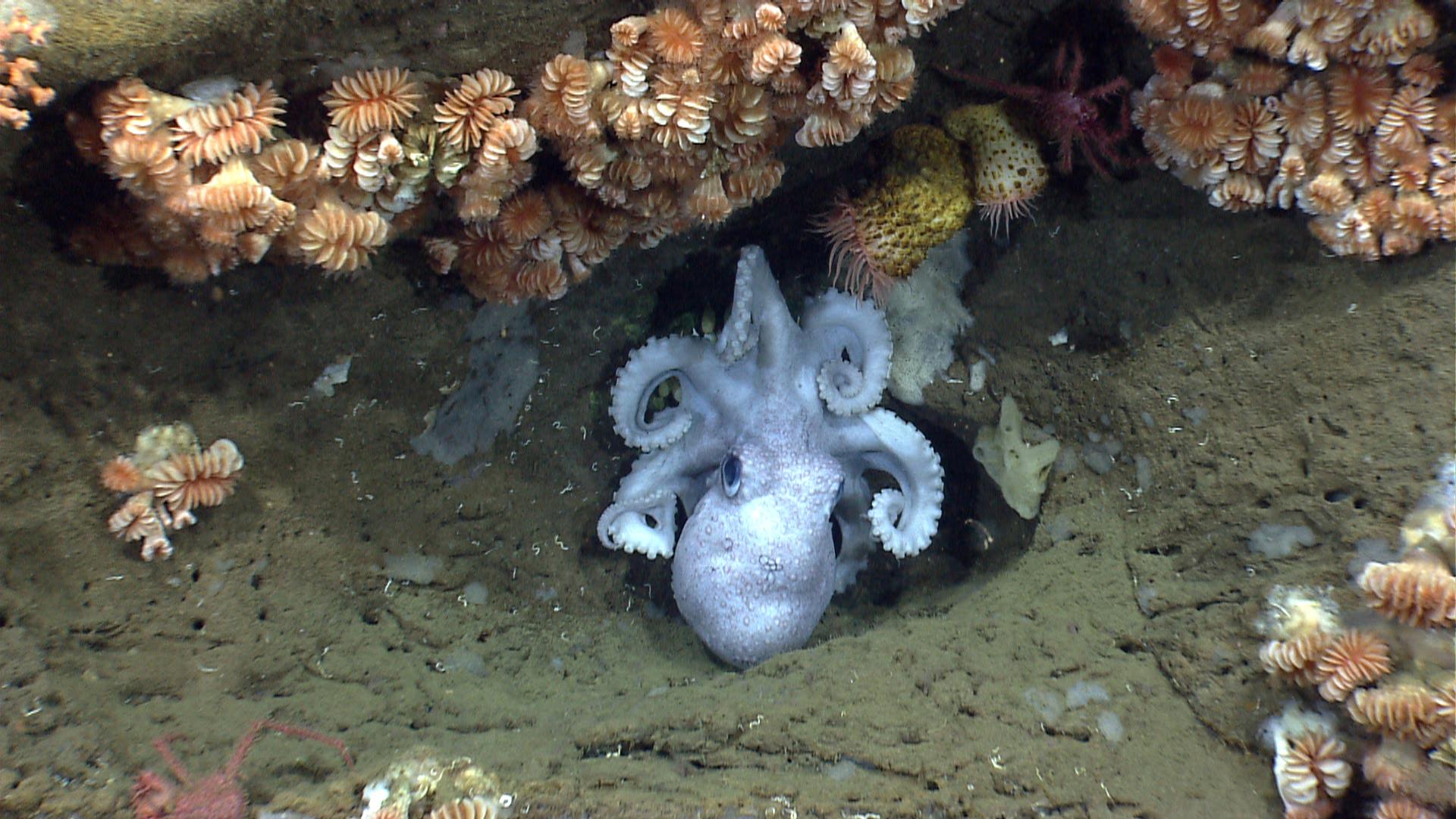 Океан самок на фото 6