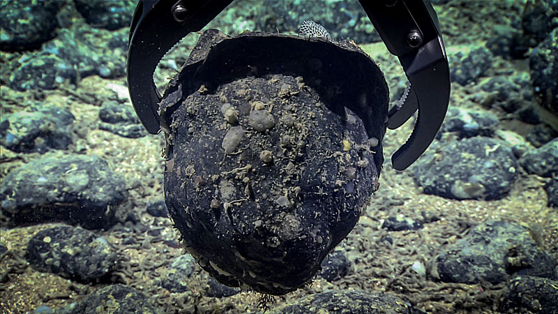 The robotic arm on the remotely operated vehicle Deep Discoverer grabs one of the many pieces of stone rubble near the scarp. This stone likely fell from the scarp feature and was transported and eroded by currents, but further study back on the surface will tell us more about its history and the area in general.