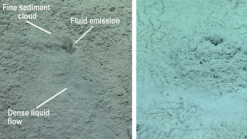 (Left) Fluid was observed shooting straight up a few centimeters from small holes (about one centimeter across) on top of the low relief mounds. The denser liquid component of the fluid effluent flowed downhill, while fine sediment entrained in the emission billowed into the water column. (Right) In some places, the fluid flows from the top of the low relief mounds have built sediment features a few centimeters high around the holes.