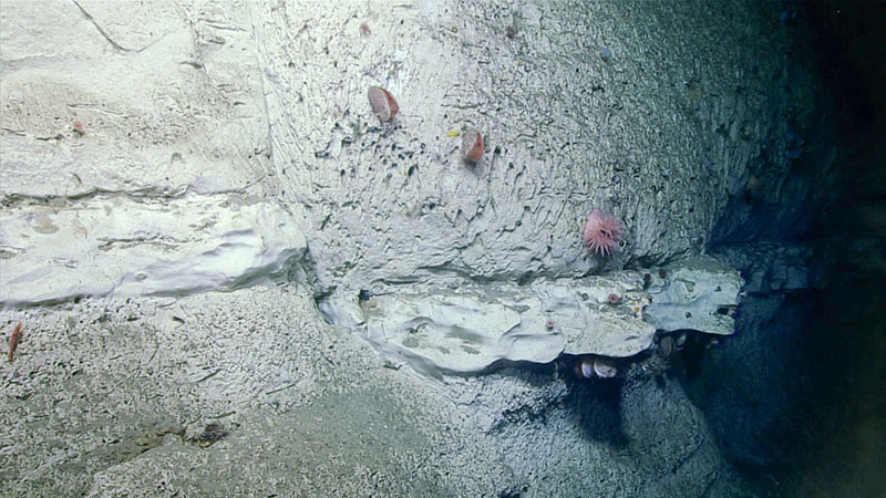 A fault in a rockface observed during the final dive of the Deep Connections 2019 expedition. Harder carbonate rock was more frequently overgrown by organisms compared to the softer interceding areas.