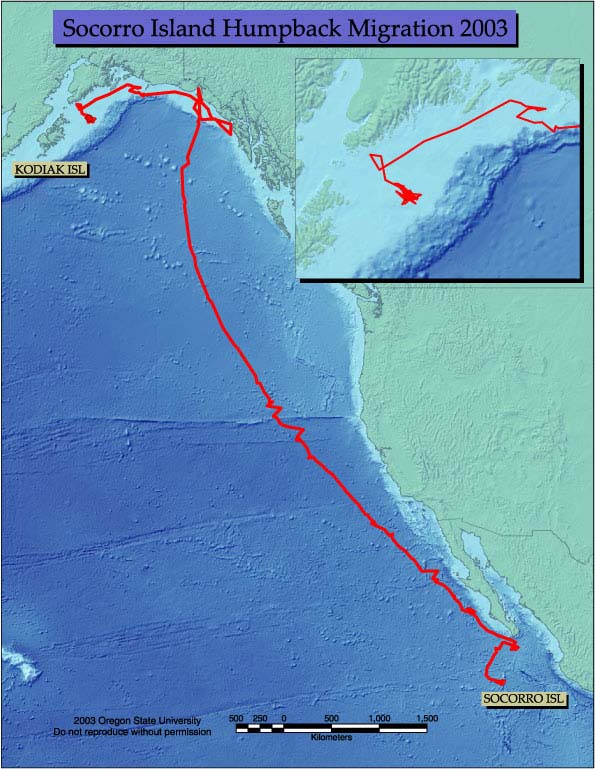 Nekton Location TThis map shows a tagged whale