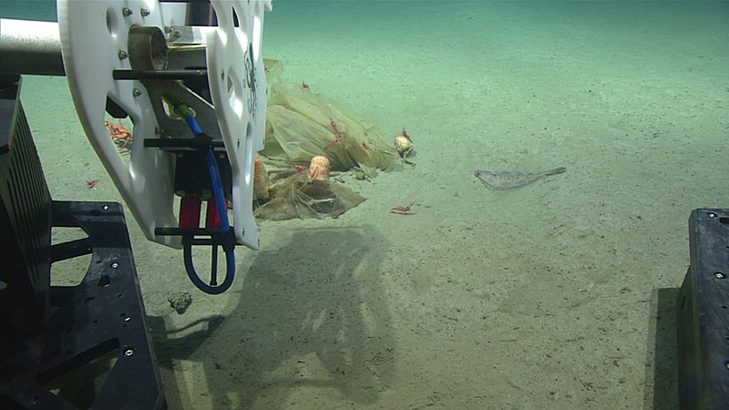 SeaVision mounted on ROV Deep Discoverer as the mission team prepares to scan marine debris.