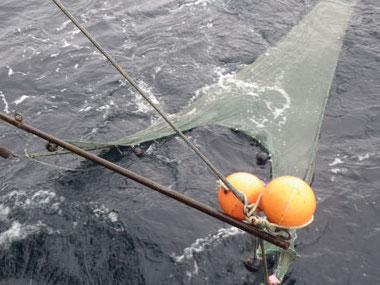 Trawls